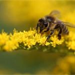 蜂の巣を駆除する方法。スズメバチ、アシナガバチの巣の種類