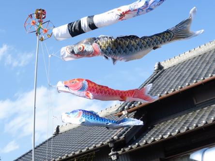 鯉のぼりと屋根