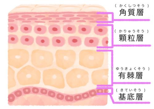 皮膚2-500
