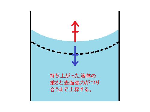 持ち上がった液体の重さと表面張力がつり合うまで上昇する。